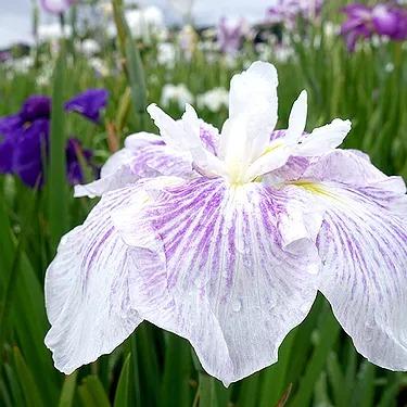 廣木光一 撮影 Flower